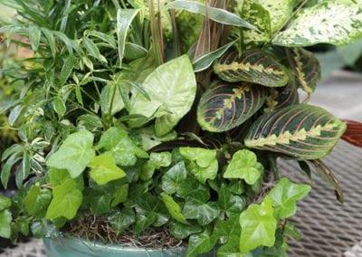 Foliage Dish Gardens