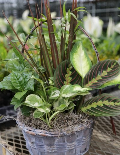 foliage-dish-garden-small2